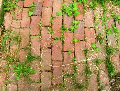 how-to-kill-weeds-a-path