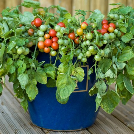 Growing Vegetables In Containers Amp Pots How To Guide