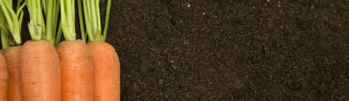 vegetable compost